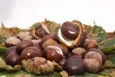 Nice autumn chestnuts — Stock Photo