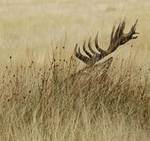 Açık kahverengi — Stok fotoğraf