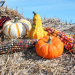 Stock Photo: Country Mini Pumpkins