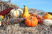 Country Mini Pumpkins — Stock Photo