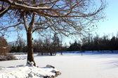 Frozen Snowy Pond — Stock Photo
