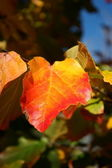 Fall Colors — Stock Photo