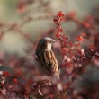 Sparrow on a branch — Stock Photo #1785685