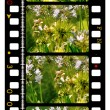 35mm Film - Stockfoto