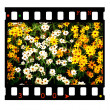 Movie Film — Stock Photo #1854875