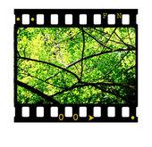 Fotogramas de película de 35mm — Foto de Stock