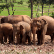 Elephants — Stock Photo #1938497