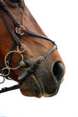 Bridle — Stock Photo