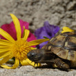 Little turtle and flowers — Stock Photo