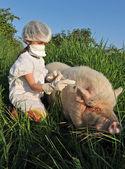 Swine Influenza Flu — Stock Photo
