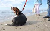 Hond krabben op het strand — Stockfoto