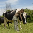 Stock Photo: Teen and cow