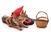 Cappuccetto rosso — Foto Stock
