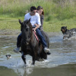 Royalty-Free Stock Photo: Riding couple in a river with dogs