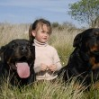 Stock Photo: Dangerous dogs and child