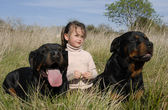 Dangerous dogs and child — Stock Photo