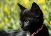 Black kitten — Stock Photo