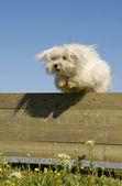 Skoki psów — Zdjęcie stockowe