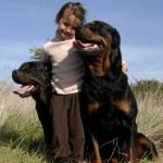criança e cães perigosos — Foto Stock
