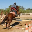 Stock Photo: Jumping brown horse