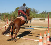 Jumping brown horse — Stock Photo