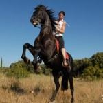 Rearing horse — Stock Photo #2048004