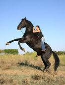 Rearing horse — Stock Photo