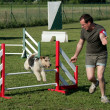 Jumping Fox terrier — Foto de Stock