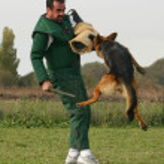Training of police dog — Stock Photo #2150962