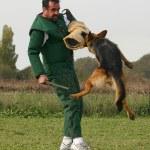 Training of police dog — Stock Photo