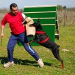 Training of doberman - Stock Photo