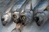 Red fishes — Stock Photo