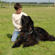 Newfoundland dog and child - Stock Photo