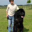 Stock Photo: Newfoundland dog and child