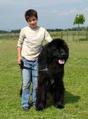 Newfoundland dog and child — Stock Photo