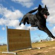 Jumping Groendal - Stock Photo