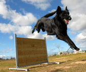 Jumping Groendal — Stock Photo