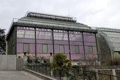 Greenhouse of museum in Paris — Stock Photo