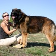 Foto Stock: Leonberger and girl