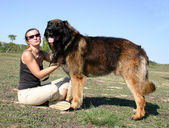 Leonberger and girl — Stok fotoğraf
