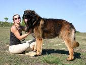 Leonberger et fille — Photo