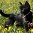 Stock Photo: Black kitten