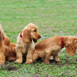 Stock Photo: Five little dogs