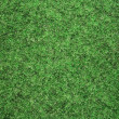 Grass — Stock Photo #2065482