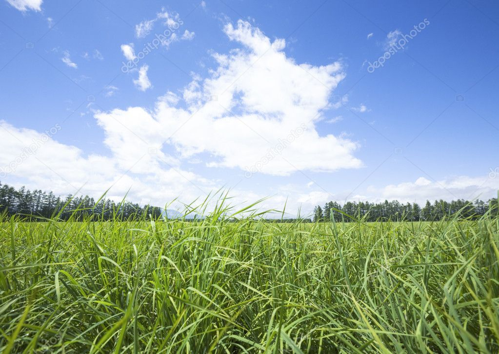 Summer landscape — Stock Photo #2030269