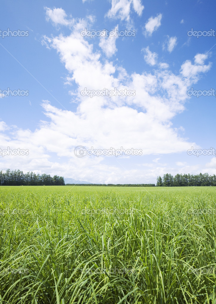 Summer landscape — Stock Photo #2030272