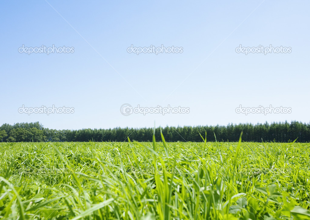 Summer landscape — Stock Photo #2030306