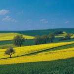 naturen landskap — Stockfoto