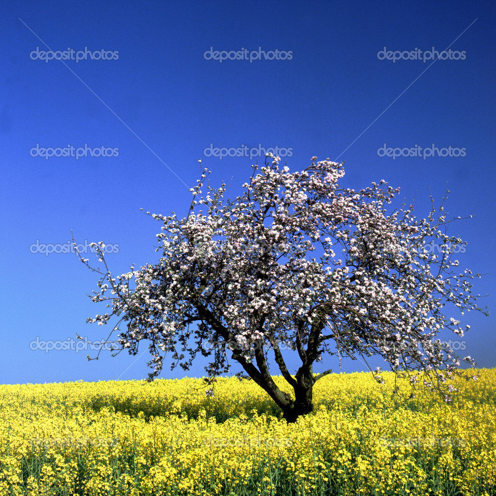 Nature landscape   Stockfoto #2062835