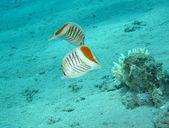 Mundo subaquático — Fotografia Stock
